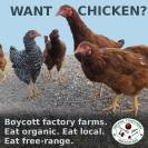 Factory farming - poultry chicken free range better