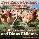 Factory farming - poultry chicken free range still live as slaves and die as children