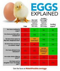 Factory farming - poultry eggs explained