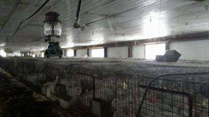 Factory farming - rabbits 02