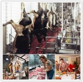 Factory farming - realities of the production