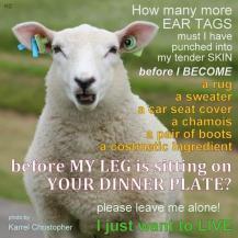 Factory farming - sheep lamb 02