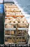 Factory farming - sheep live export