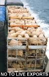 Factory farming - sheep live export