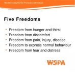Message - Five freedoms