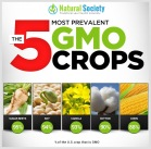 Message - GMOs most common foods