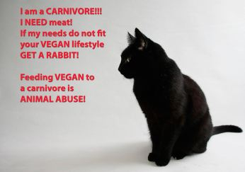 Vegan - cats need meat