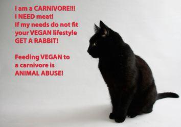 Vegan - cats need meat