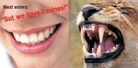 Vegan - fallacies canines 1