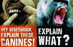 Vegan - fallacies canines 2