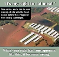 Vegan - fallacies it's my right to eat meat