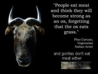 Vegan - fallacies oxen don't eat meat