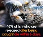 Vegan - fish 46% die