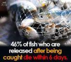 Vegan - fish 46% die