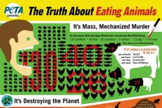 Vegan - stats truth about eating animals