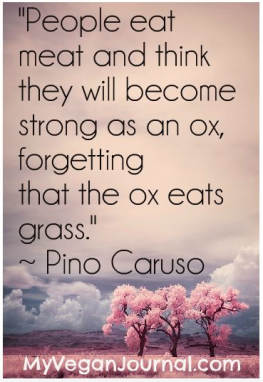 Vegan - truth meat 03 meat strong as an ox but eat grass