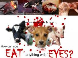 Vegan - truth reasons eat anything with eyes