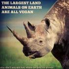 Vegan - truth reasons largest land mammals all vegan