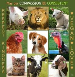 Vegan - truth reasons respect for animals