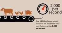 Vegan - truth stats slaughter