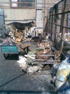 Yang's shelter set 2 03