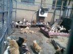 Yang's shelter set 2 04