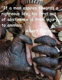 Animal abuse - Abstinence from injury