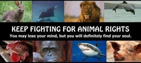 Animal abuse - Animal rights keep fighting