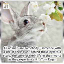 Animal abuse - Animals are somebody