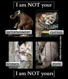 Animal abuse - Animals I am not your entertainment