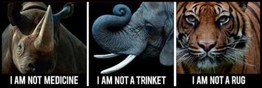 Animal abuse - Animals not medicine, not trinket, not rug