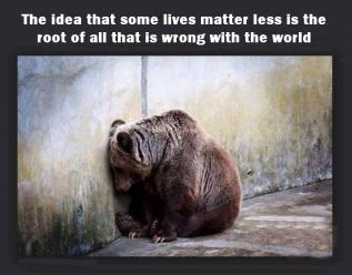 Animal abuse - Bear the idea that some lives matter more