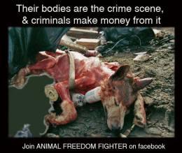 Animal Abuse - Bodies are the crime scene