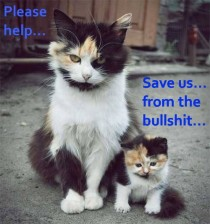 Animal abuse - Bullshit cat save mom and baby