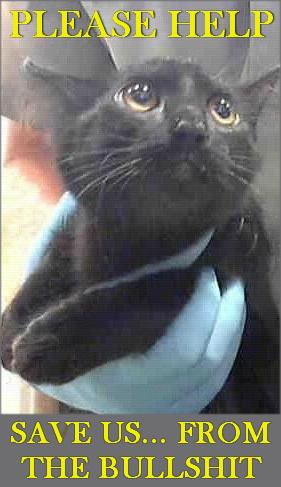 Animal abuse - Bullshit cats help save us black cat in hand