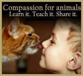 Animal abuse - Children compassion for animals