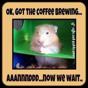 Animal abuse - Coffee brewing