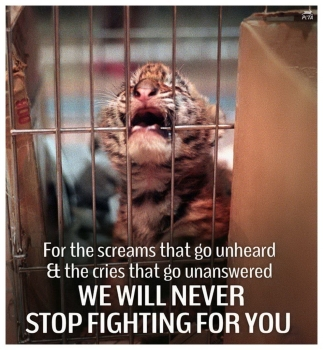 Animal abuse - Help we will never stop fighting tiger cub