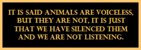 Animal abuse - Pics It is said that animals are voiceless but they are not