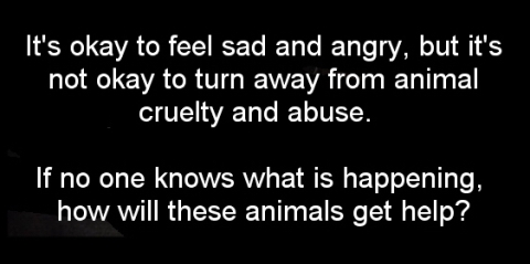Animal abuse - Pics its OK to feel sad and angry but it's not ok to turn away USE