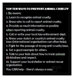 Animal abuse - Pics Top 10 ways to prevent animal cruelty looks away part of problem