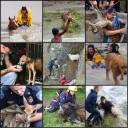 Animal abuse - Rescues