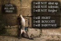 Animal abuse - Truth rebel I will boycott