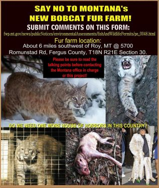 Fur and skin - Montana bob cat farmjpg