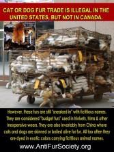 Fur and skin trade - Cat Canada importing