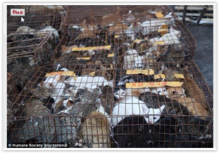 Fur and skin trade - Cats in china