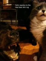 Fur and skin trade - Cat's reaction to bear rug