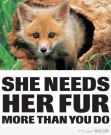 Fur and skin trade - Fox 02 She needs her fur more than you do