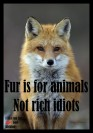 Fur and skin trade - Fox 03 fur is for animals