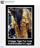Fur and skin trade - Fur coat legal vintage tiger skins